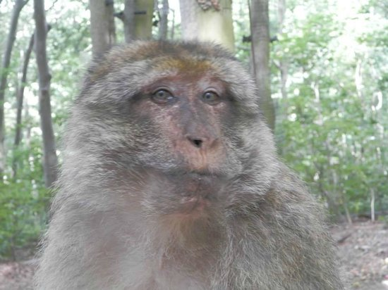 La Montagne des Singes : If they chew at you it's like a smile for humans.