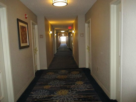 Renaissance Fort Lauderdale Cruise Port Hotel : Rooms' corridor