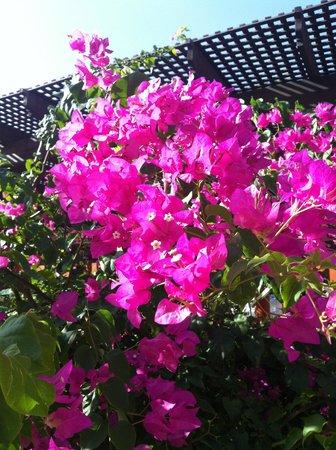 Iberostar Rose Hall Beach Hotel : flowers of Jamacia