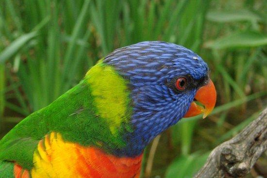 Le Parc des Oiseaux : Loris