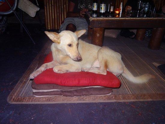 Oasis Aqua Bar & Restaurant: Dog