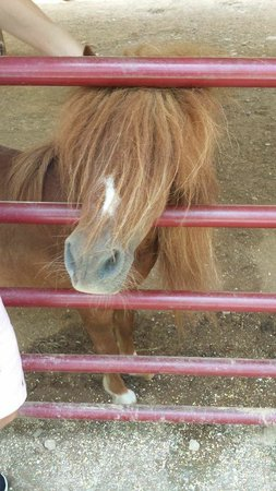 Big Rock Dude Ranch at Ponderosa : Petting Zoo