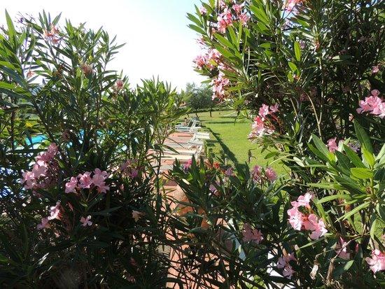Pietrafitta Podere La Costa: Prachtige tuin