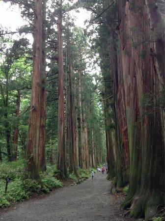 Togakushi Shrine Okusha: 奥社までは長い道のり