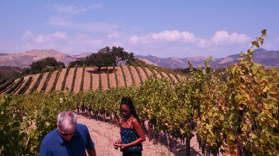 Sustainable Vine Wine Tours : A fun visit