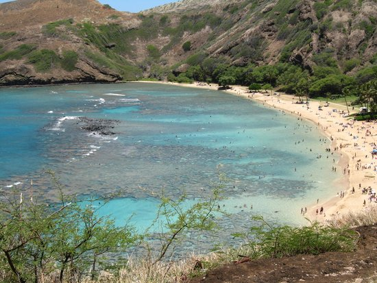 Hanauma Bay Nature Preserve : Hanauma Bay- Best for first time snorkel