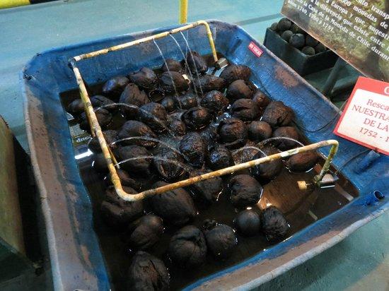 Museo de los Naufragios y Tesoros: Cocos encontrados no Lord Clive
