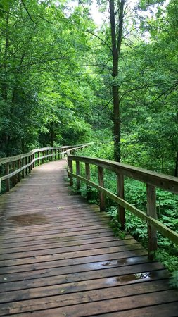 Rattray Marsh Conservation Area: Walking on the boardwalk in the marsh