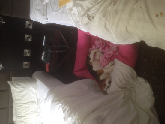 Holiday Inn Telford - Ironbridge: dog flat out!
