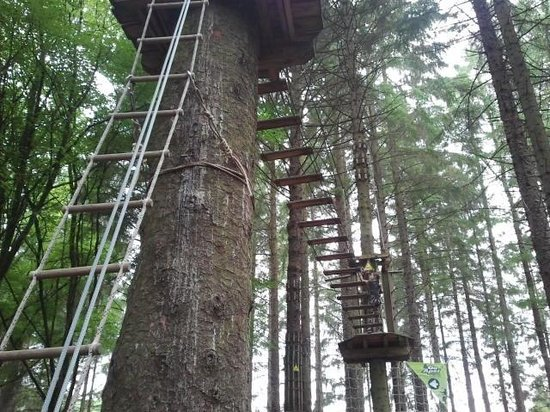 Go Ape: Some of the ladders