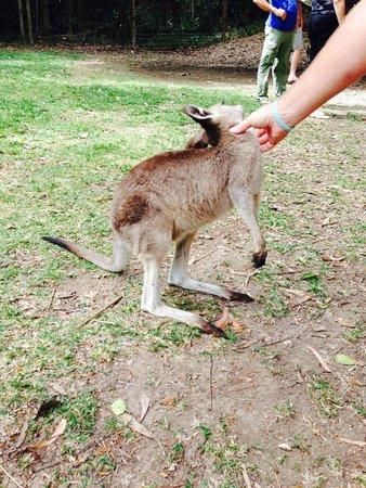 Hartley's Crocodile Adventures: Australian Animals