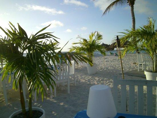 Divi Aruba Phoenix Beach Resort: Pure Ocean Restaurant