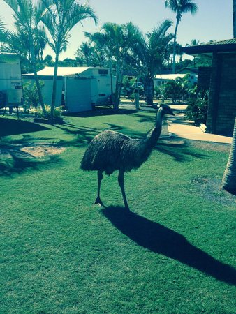 BIG4 Capricorn Palms Holiday Village: Local Wildlife