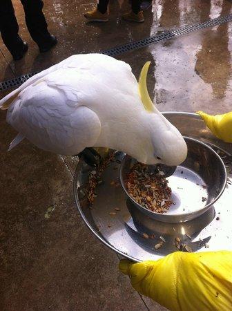 Dandenong Ranges: Bird feeding at Grants Picnic Ground