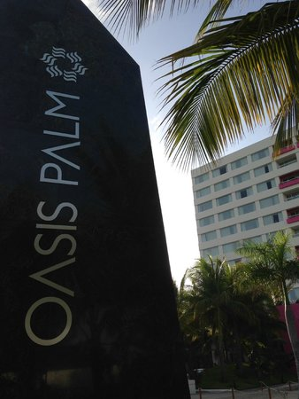 oasis palm