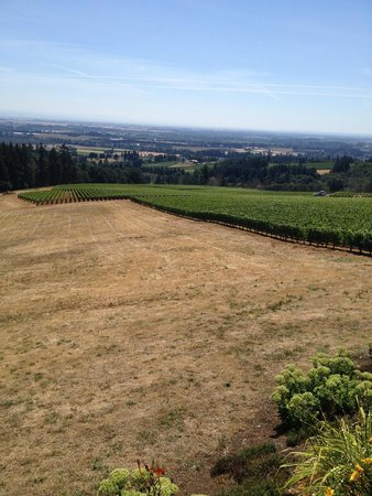 Domaine Drouhin Oregon: View from tasting deck