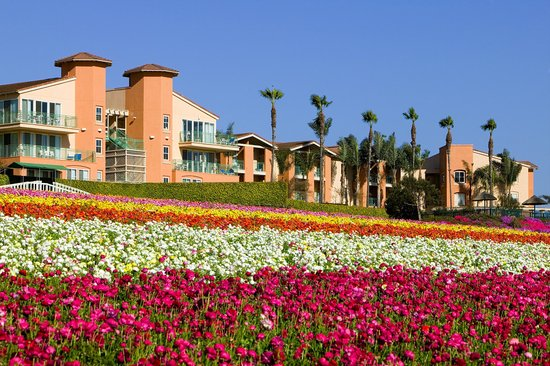 Grand Pacific Palisades Resort and Hotel: Overlooking the Carlsbad Flower Fields