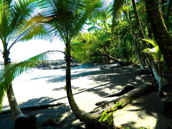 Jaguar's Jungle: Beach