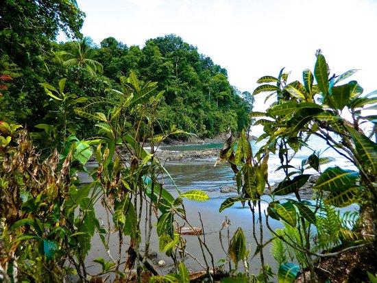 Jaguar's Jungle: Beach located on the 140 acre property