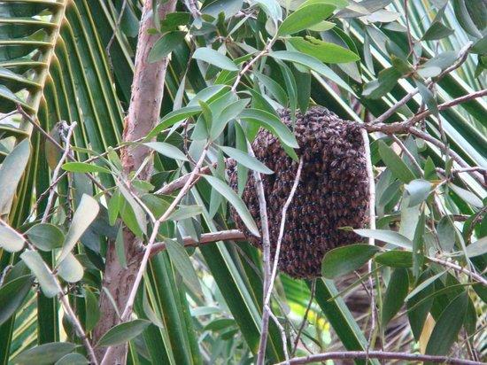 Renaissance Phuket Resort & Spa: Hive