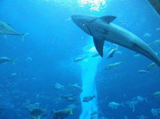 Atlantis, The Palm: Their huge aquarium