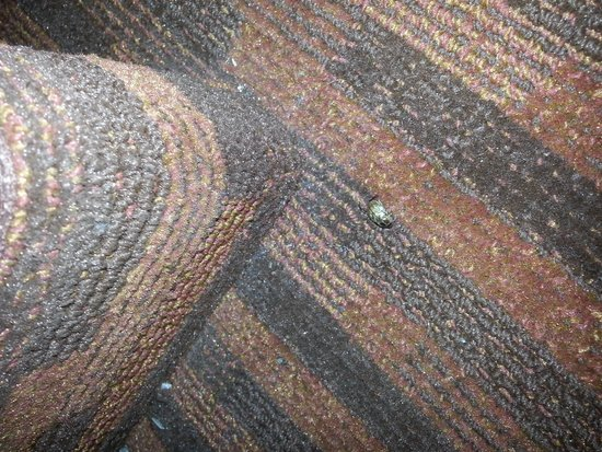 Howard Johnson Inn Albany: bug but not a bedbug, at least.