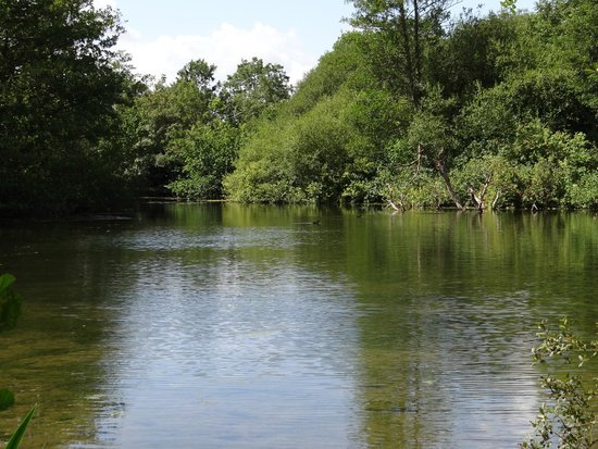 Norton Park - A QHotel: The lake