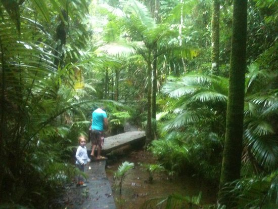 Lync-Haven Rainforest Retreat, Cabins, Camping & Wildlife Experience: one of the walking tracks...our children loved it