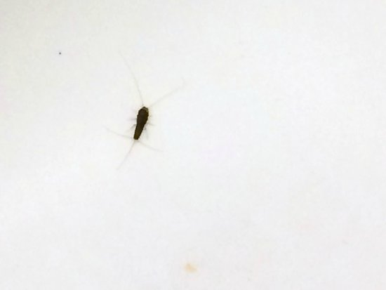 Lexington Inn & Suites: bug in tub