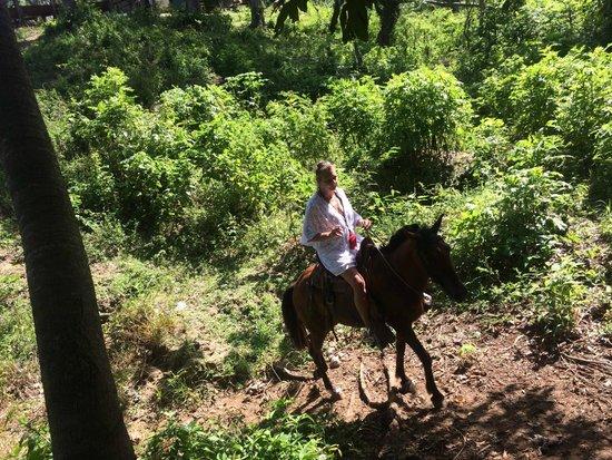 Island Marketing Ltd Roatan Cruise Excursions - Tours: Horseback Riding