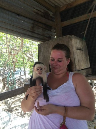 Island Marketing Ltd Roatan Cruise Excursions - Tours: Monkeys