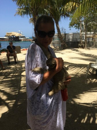 Island Marketing Ltd Roatan Cruise Excursions - Tours: Baby Sloth