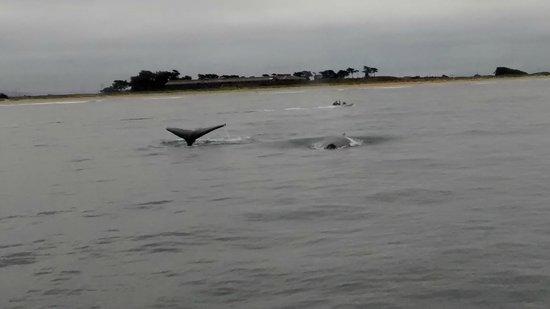 Blue Ocean Whale Watch: Humpback