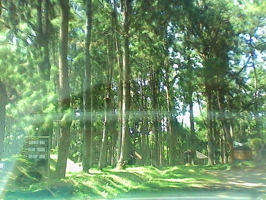 Eden Nature Park & Resort: Pine trees all around