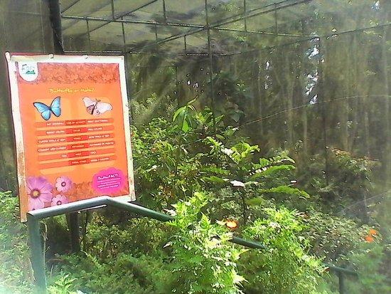 Eden Nature Park & Resort: Butterfly gardens