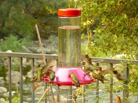 Yosemite Blue Butterfly Inn : Hummingbirds at breakfast