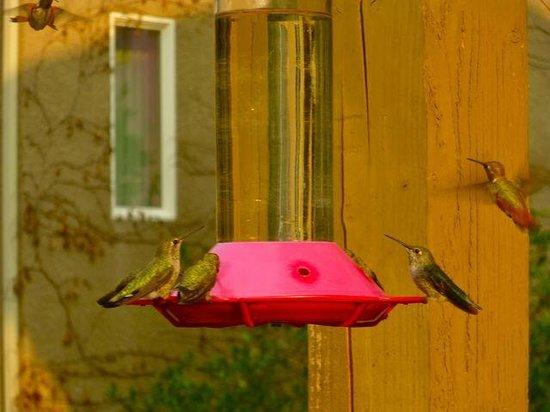 Yosemite Blue Butterfly Inn : Hummingbirds on the veranda