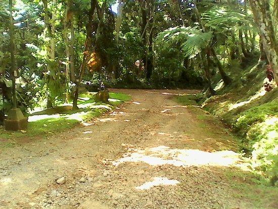 Eden Nature Park & Resort: Roads in the park