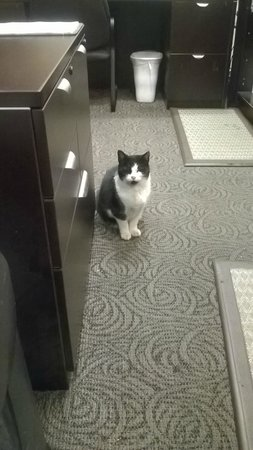 Days Inn - Vancouver Airport : Hotel cat