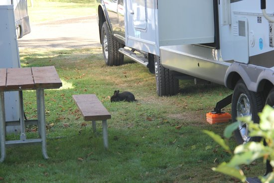 Pleasant Valley Rv Park Updated 2017 Campground Reviews