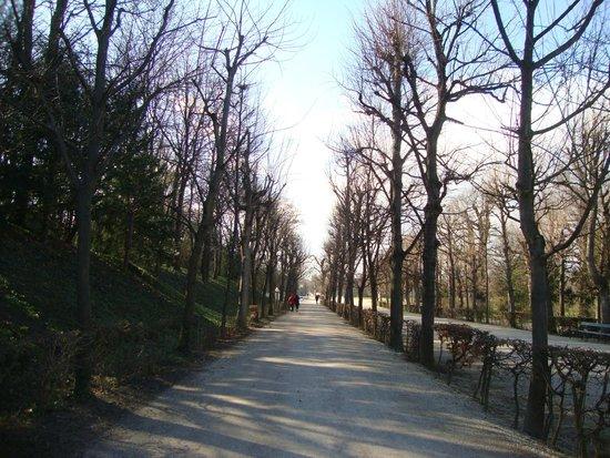 Schonbrunner Gardens: Аллея
