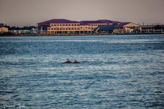 Galveston - Port Bolivar Ferry: dolphins during ferry ride