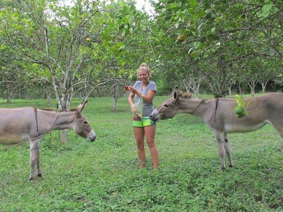 Table Rock Jungle Lodge: Feeding the donkeys