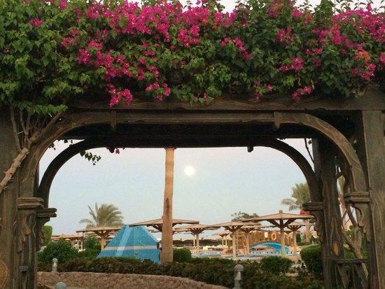 Sea Club Resort - Sharm el Sheikh: Арка
