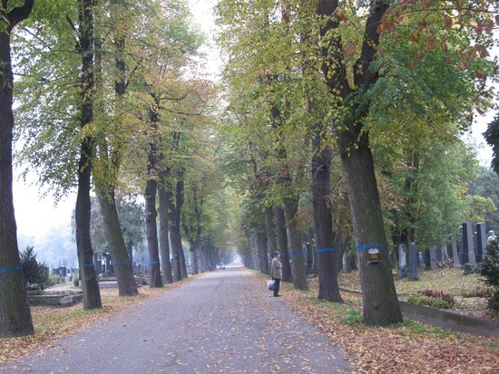 Central Cemetery (Zentralfriedhof): A path toward the destination