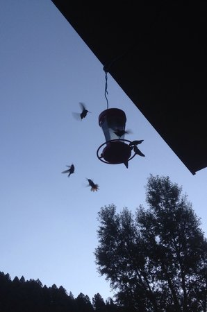 Copper King Lodge: Hummingbirds galore!!