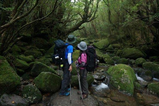Shiratani Unsuikyo Valley: 苔の森を眺めています。何か壮大なパワーを感じます。