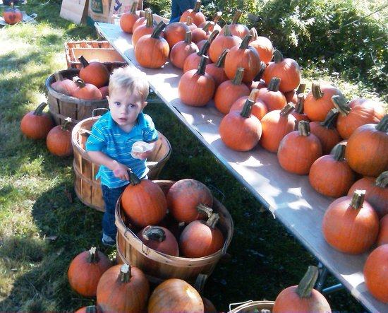 Jay Heritage Center: Picking out pumpkins at Jay Day, our popular Fall Family Festival