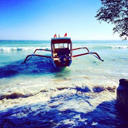 La Cocoteraie Ecolodge: Lutwana dive