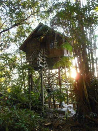 Permai Rainforest Resort: Treehouse 2